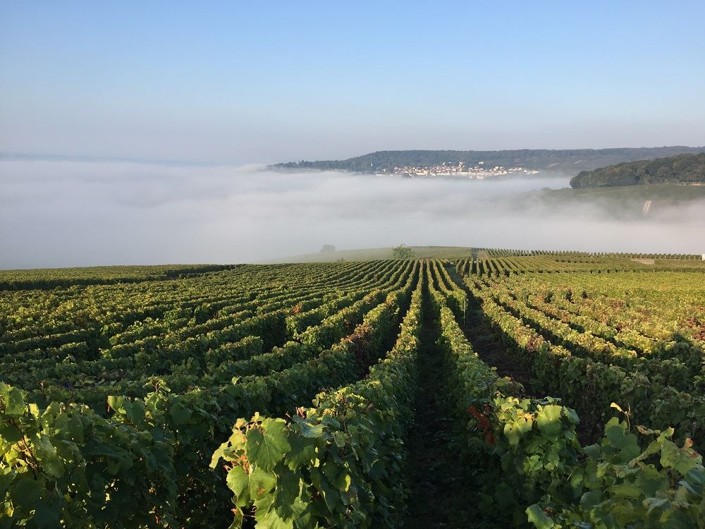 Full Day Tour in Champagne – 3 Small Producers