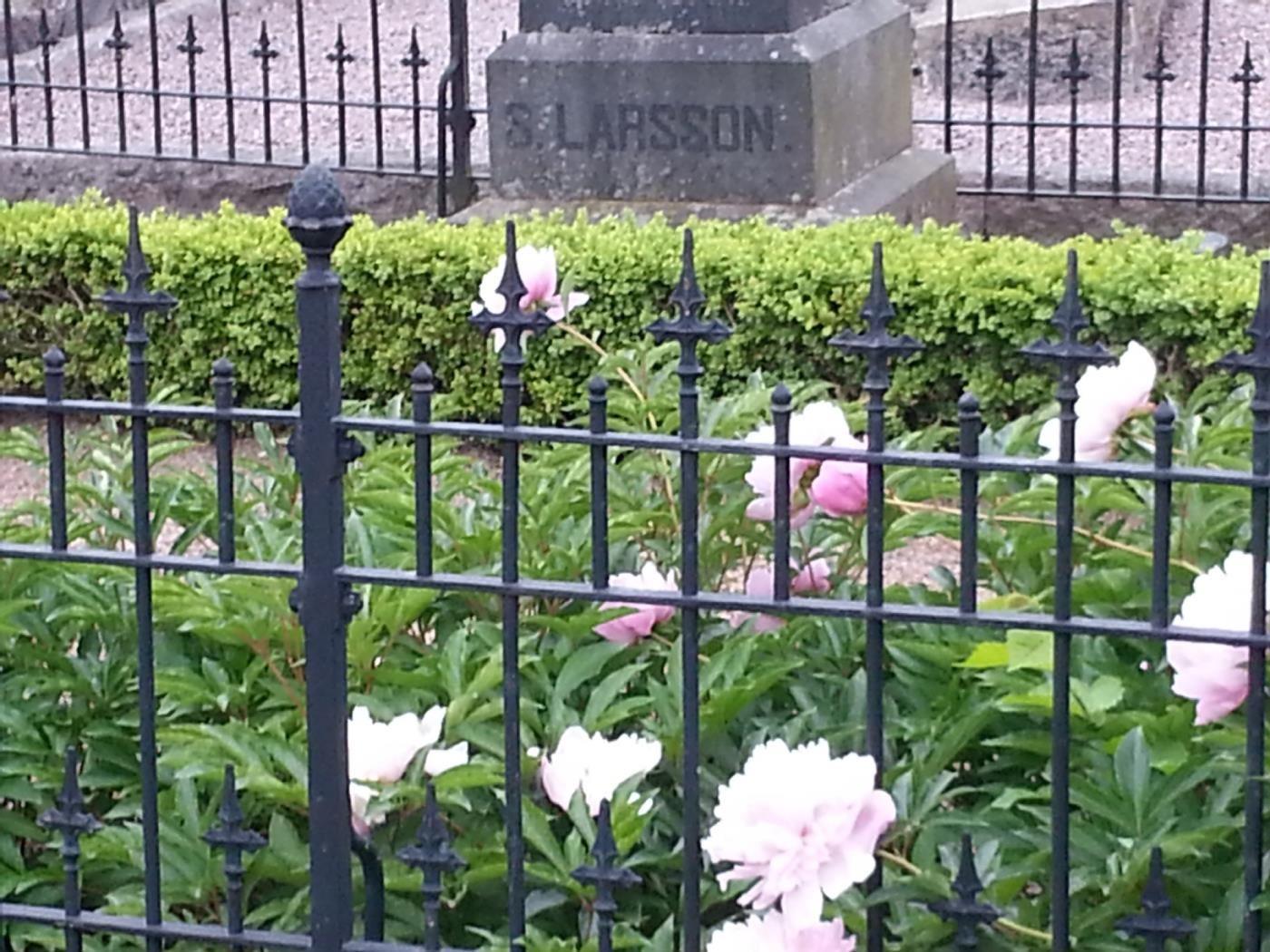Kristi Himmelfärdsdag- gökottegudstjänst på kyrkogården i Båstad