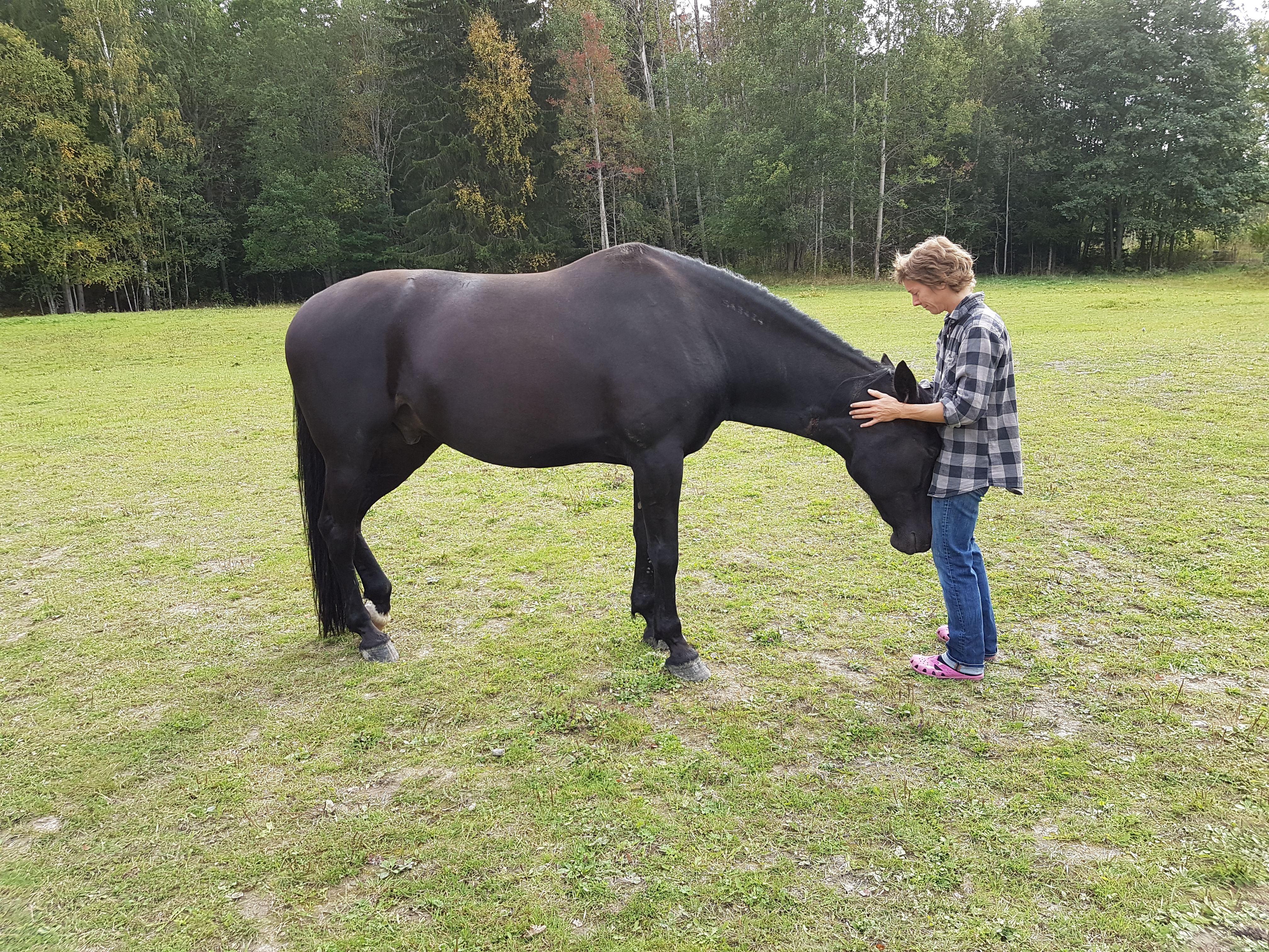 Kontakt med hästar för äldre människor
