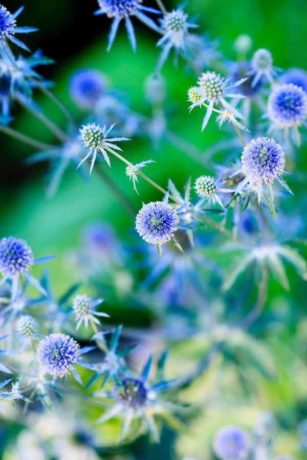 Show garden Senses