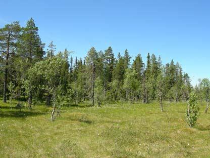 Naturschutzgebiet Lovik-Storflon