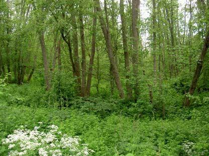 Naturschutzgebiet Långharsholmen