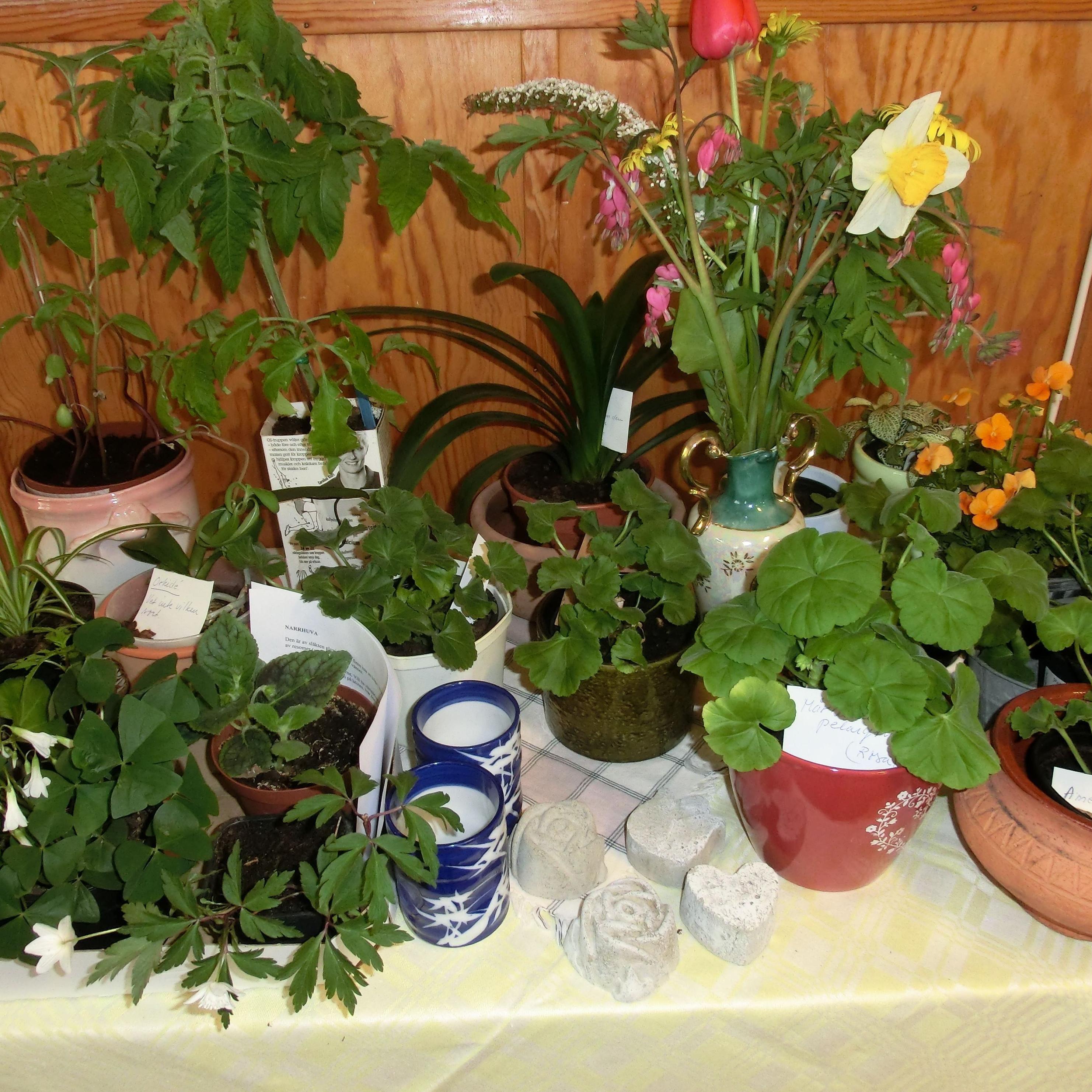 Växtförsäljning i Granbo bystuga