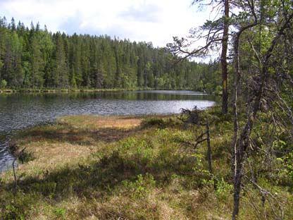 Målstaallmänningens naturreservat - skog för vandrare