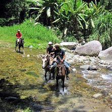 Horseback Riding - Cangrejal Valley (half day)