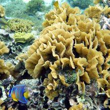 Robinson Islands - Cayos Cochinos (full day)