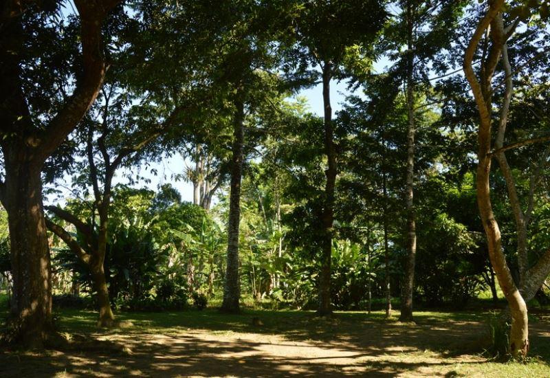 Visita a Finca Agroforestal El Oasis