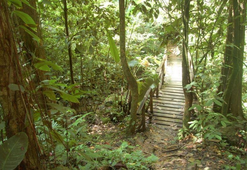 Explore el bosque de Pico Bonito por el Sendero Río Zacate