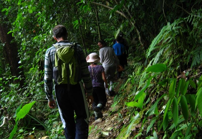 Hike Through the Forest of Pico Bonito, El Bejuco Trail