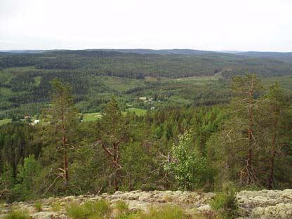 Storbergets naturreservat - gammelskog på utsiktsberg
