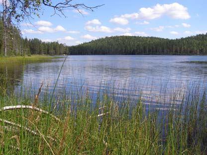 Örasjöbäcken-Storsvedjans naturreservat - gammelskog med pärlmusselbäck