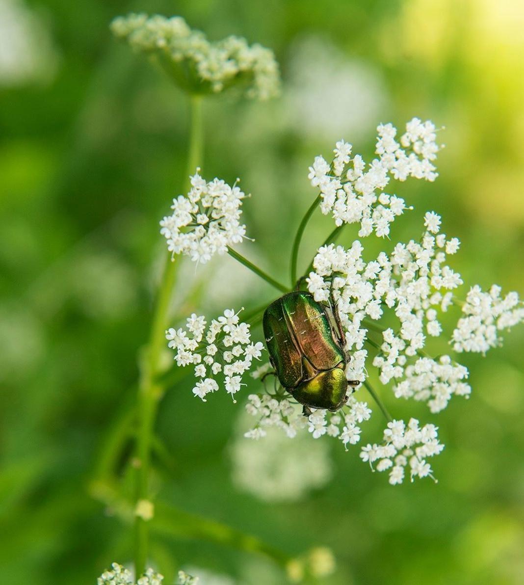 Sophia Callmer – Natur i trädgården