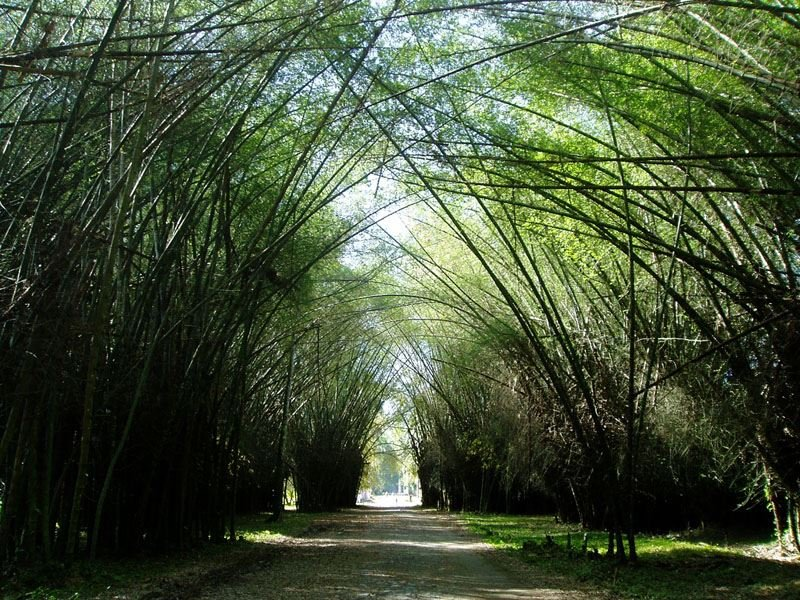 Explore the Lancetilla Botanical Garden in Tela