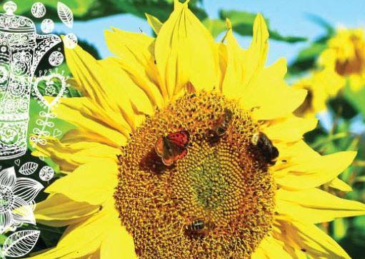 Förvandla din trädgård till en oas för dig och dina vilda grannar!
