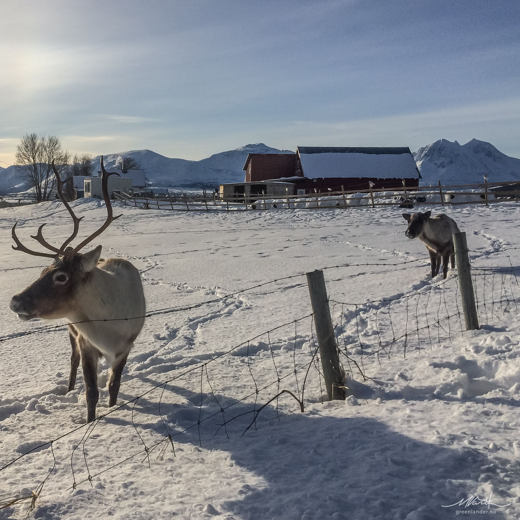 Privat fjordtur med Arctic Truck - Greenlander