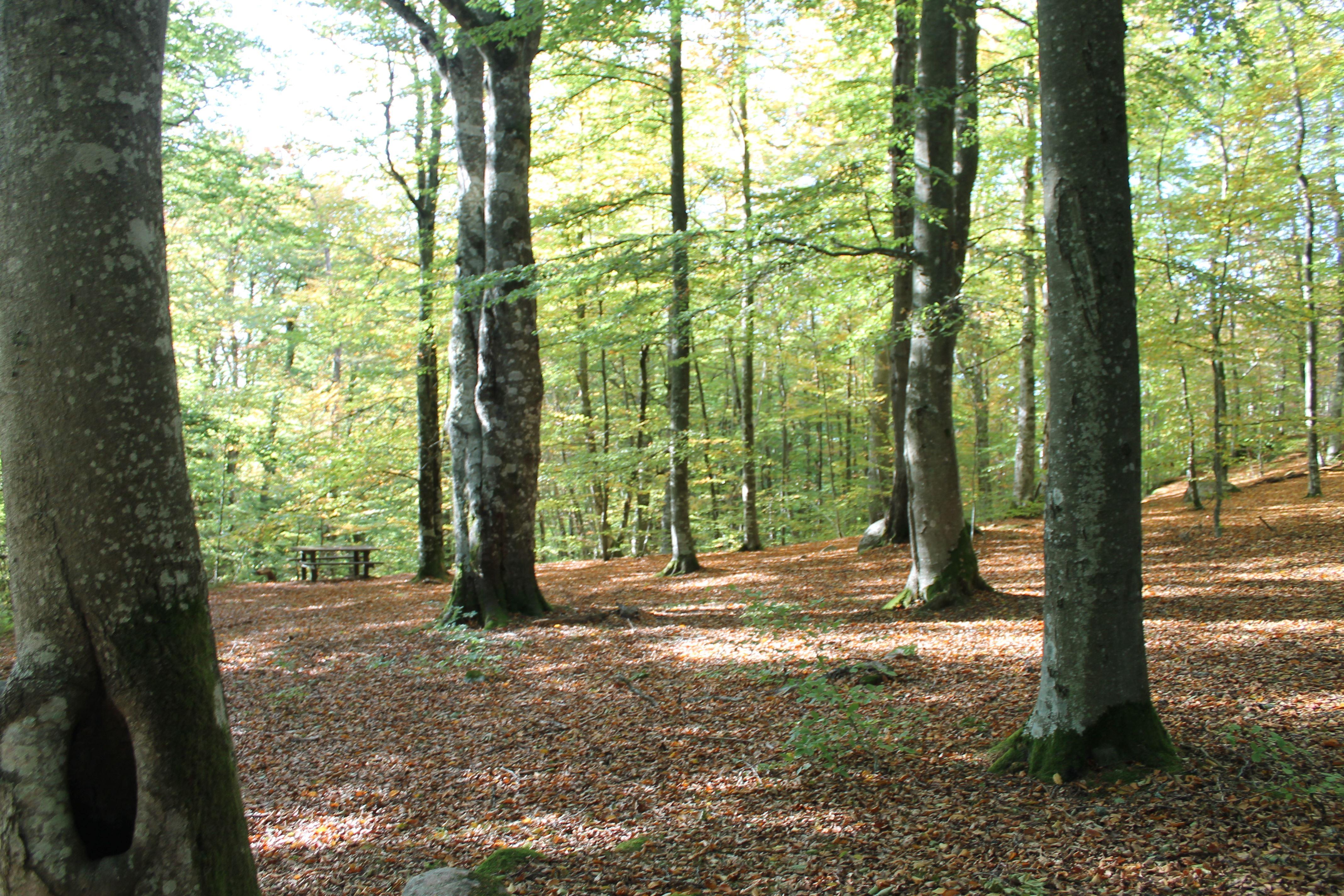 Kvänsås bokskog