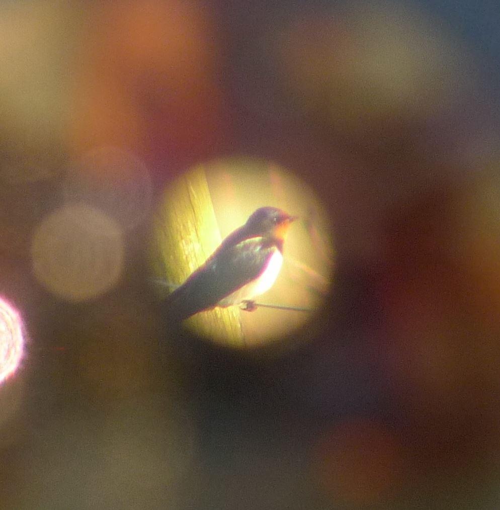 Ornitologisk vandring