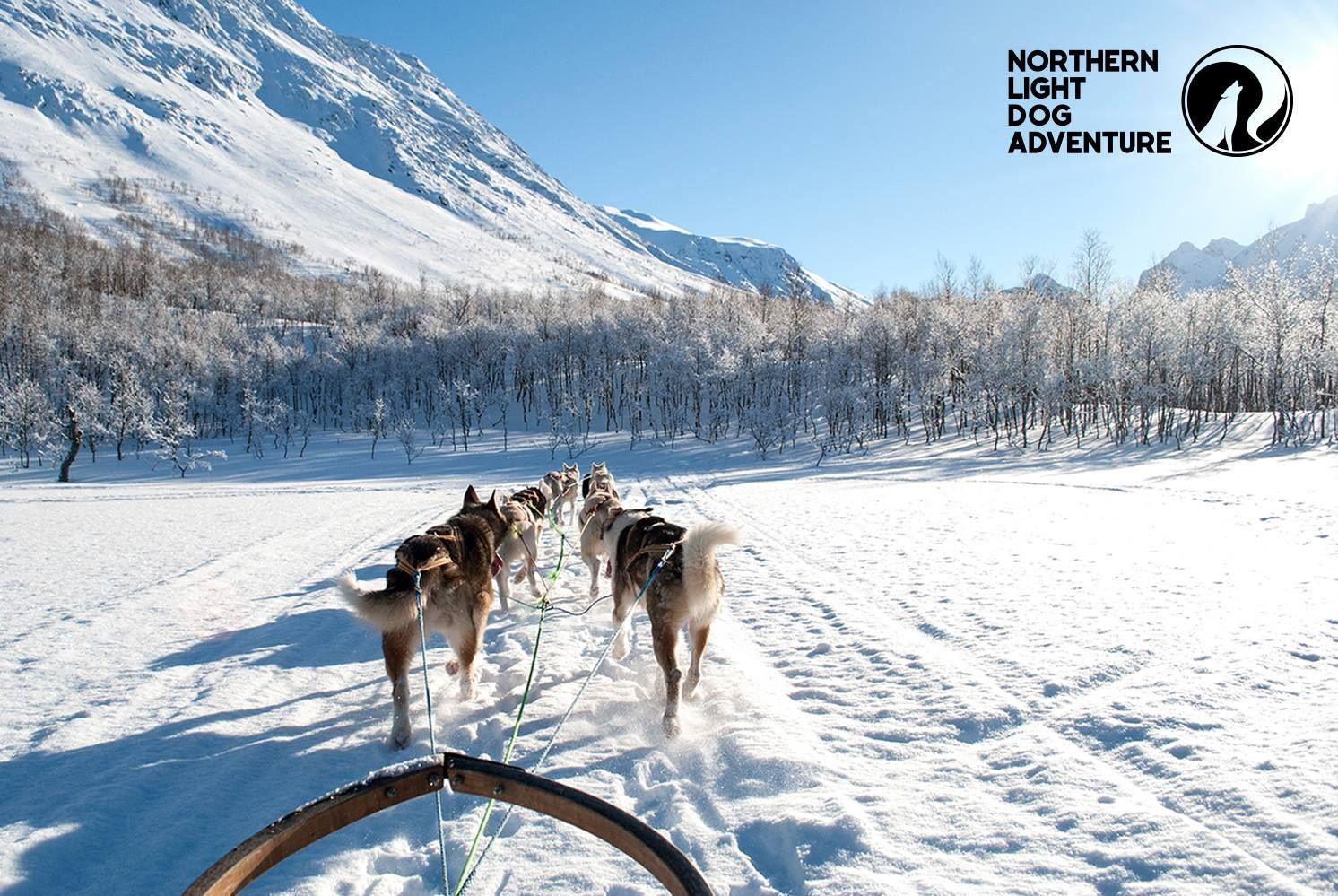 Hundekjører for en dag - Northern Light Dog Adventure