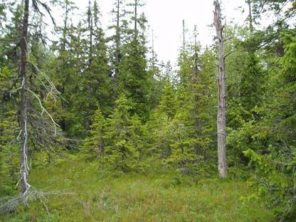 Sundsjöåsens naturreservat