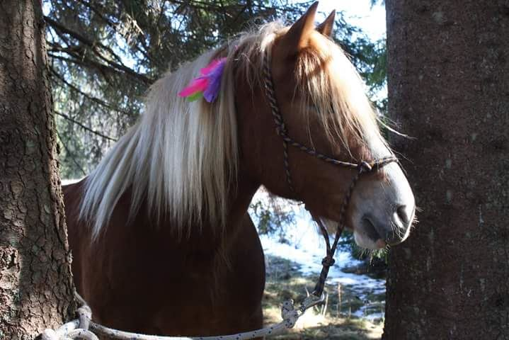 Dagstur med häst och vagn, Sollerön