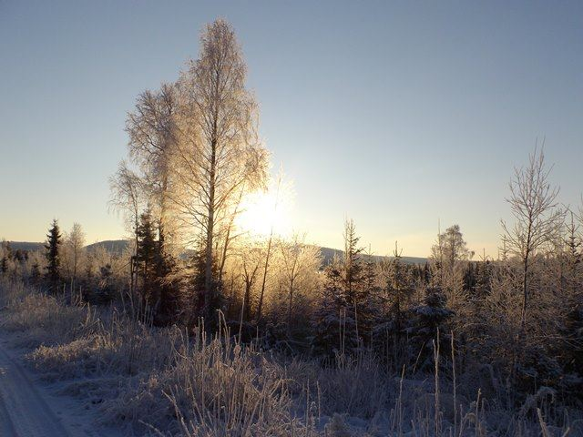 Toppfågeljakt i Rantajärvi