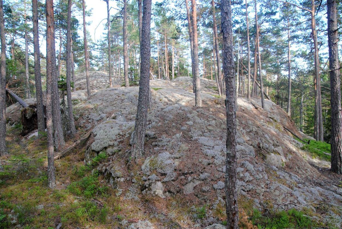 Deep forest walk in Tiveden national park