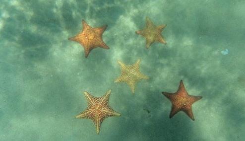 Tours de Snorkeling al banco de Las Estrellas