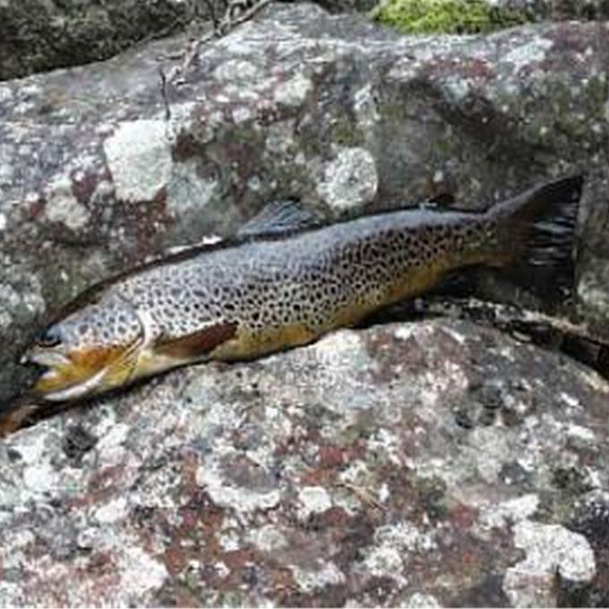 Fiskekort Envikens FVO Årskort