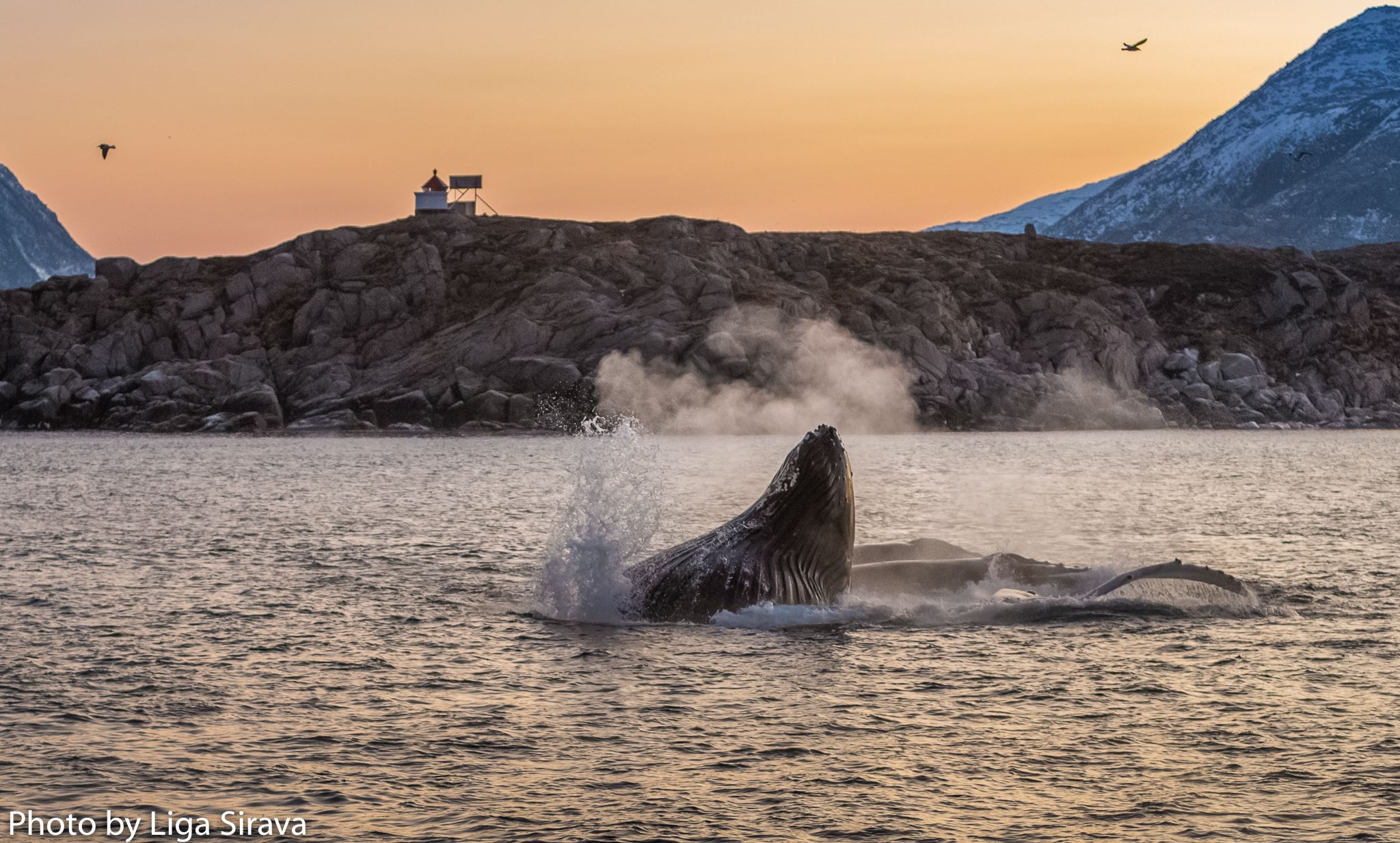 Tromsø Whale Safari