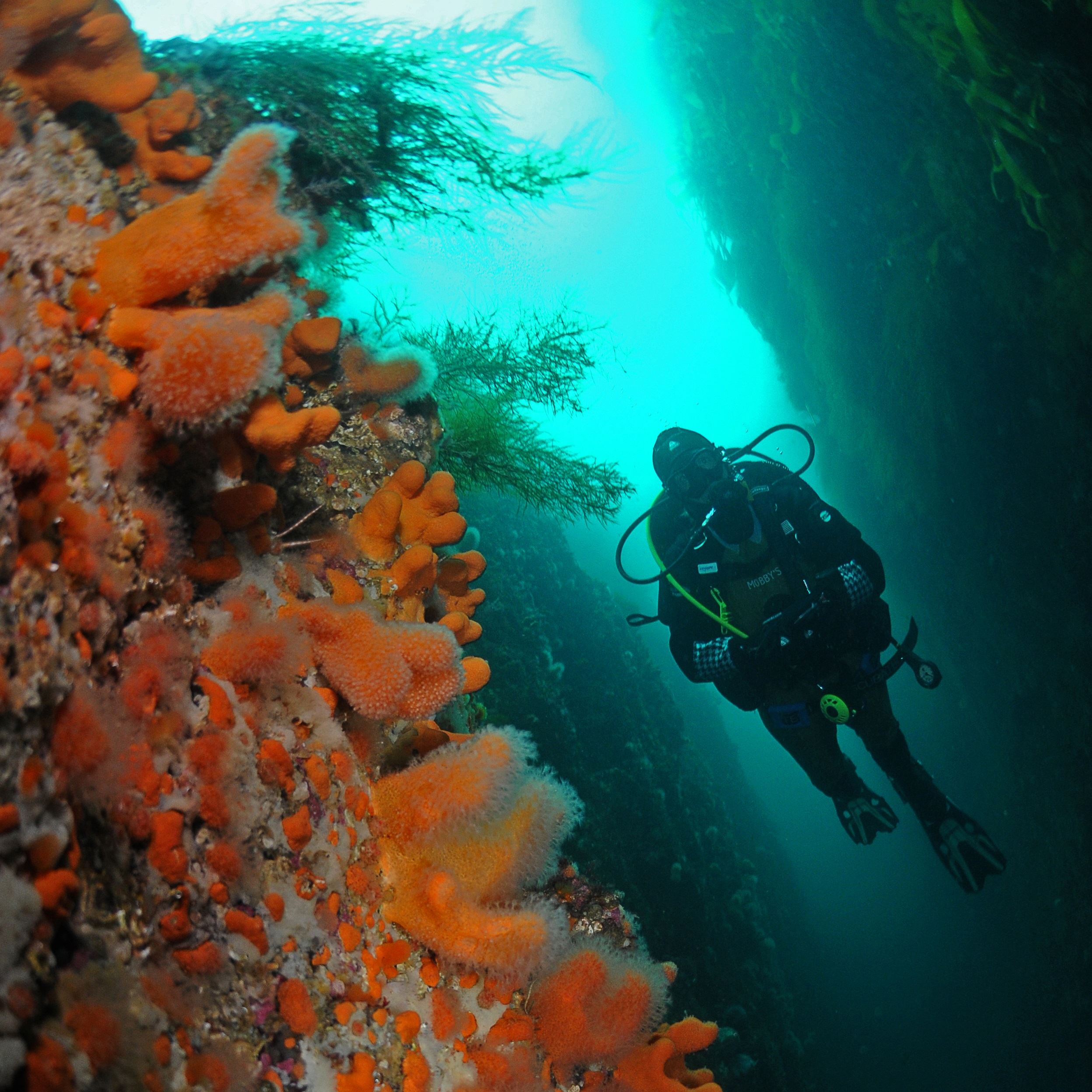 Arctic Diving from Ballstad