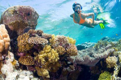 Snorkling in Roatan Bay Island