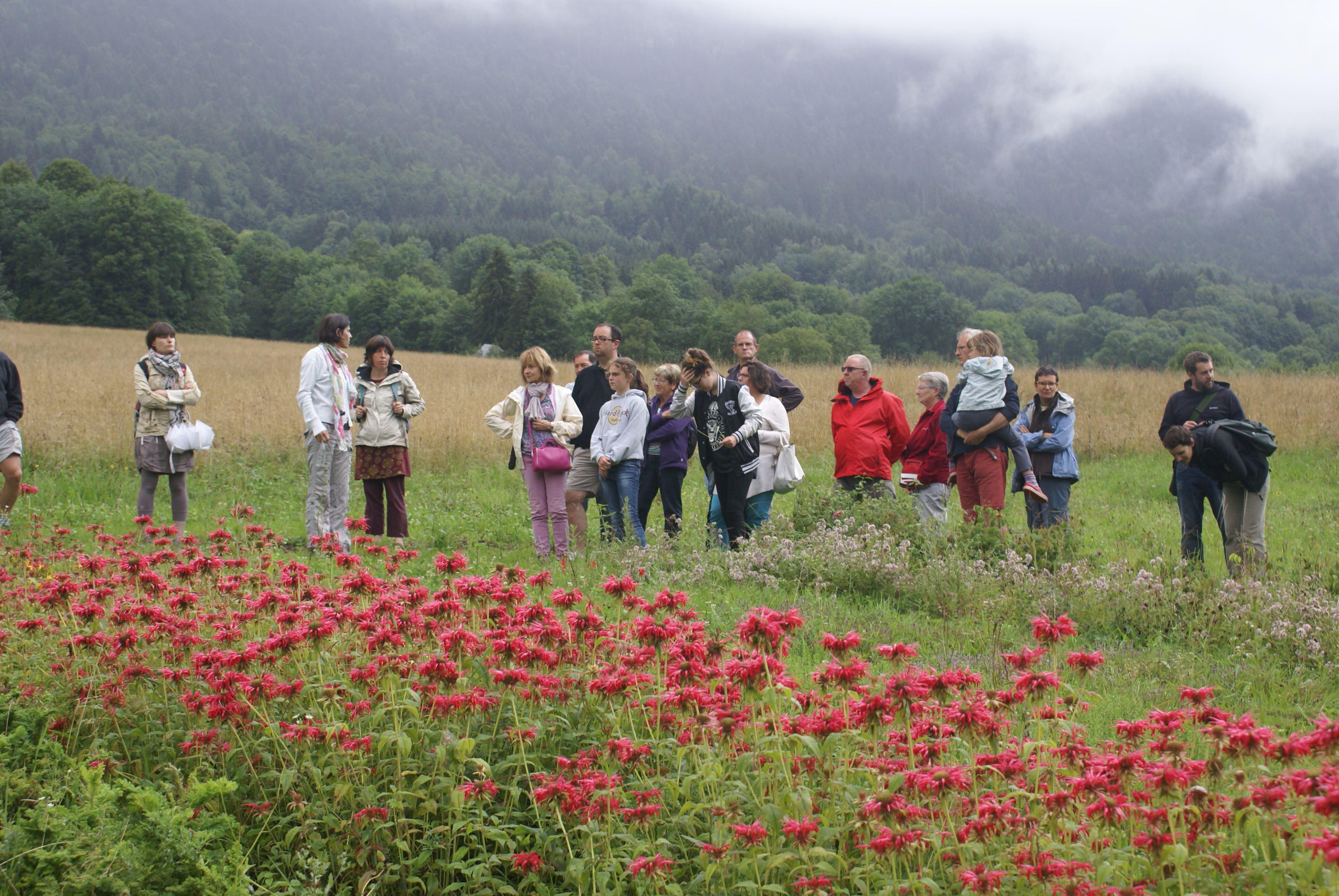 Visite Guidée - Exploitation de plantes aromatiques et médicinales Bio