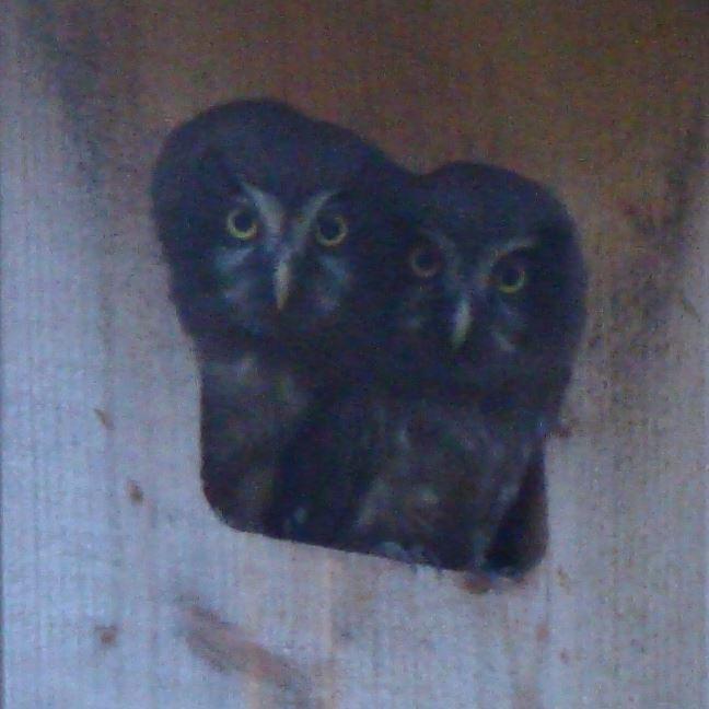 Nationalparkens dag – I fåglarnas tecken