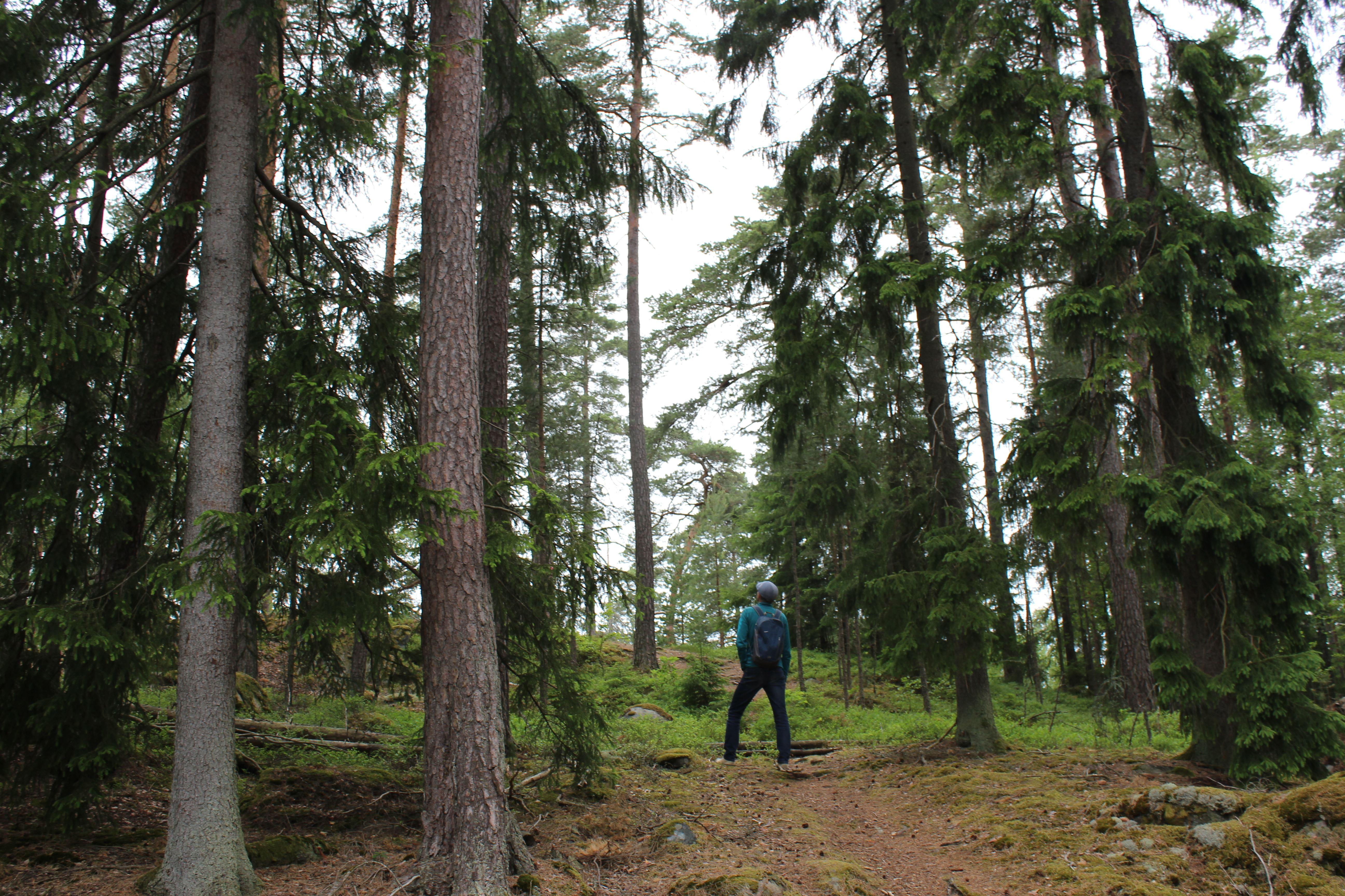 Höstvandring i Fyllerydsskogen (svamp)