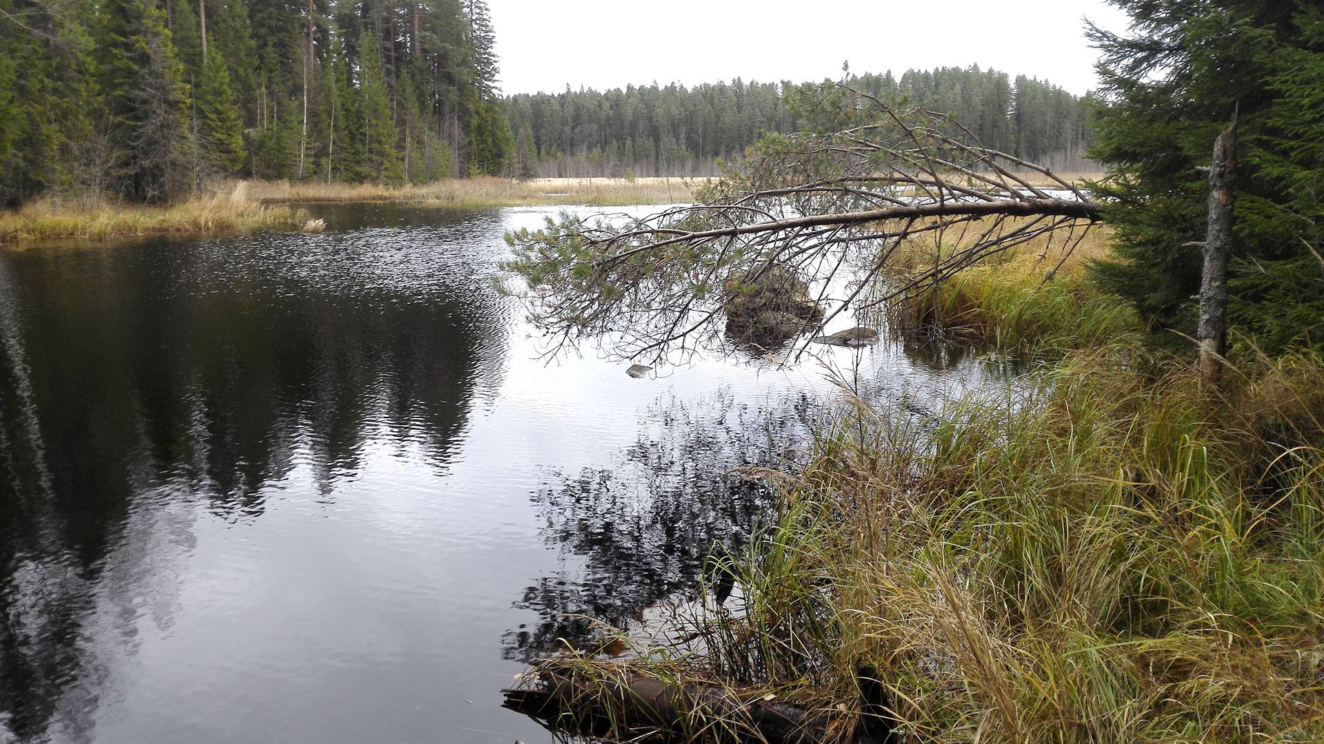 On the footsteps of beaver | Kullasmarina