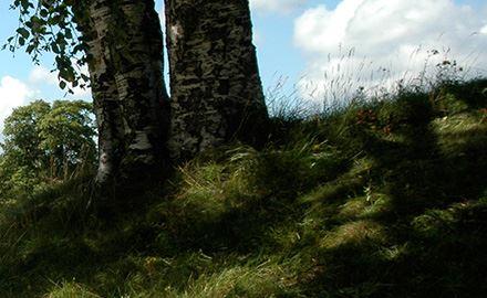 Arkeologivandring i Katrinehill, Sörnacksta skogen