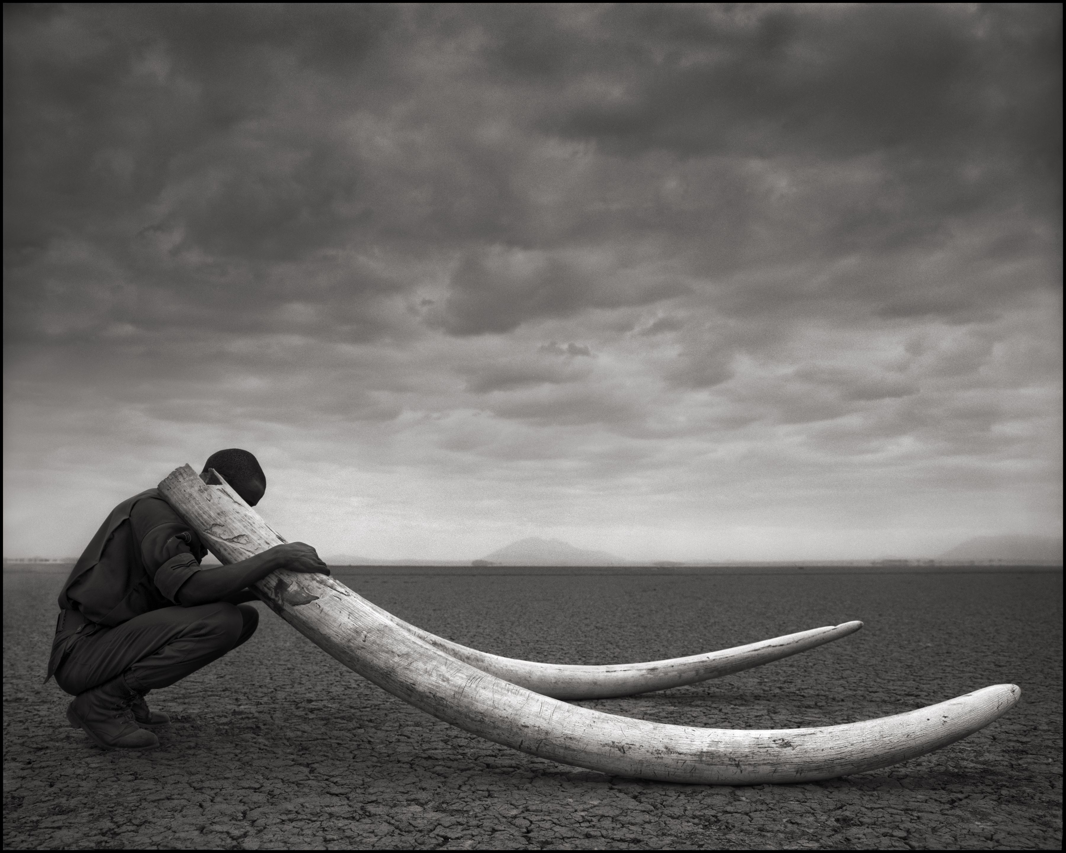 Nick Brandt, fotoutställning On This Earth – A Shadow Falls – Across The Ravaged Land