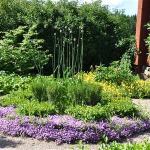 Gartenwanderung in Linnés Råshult