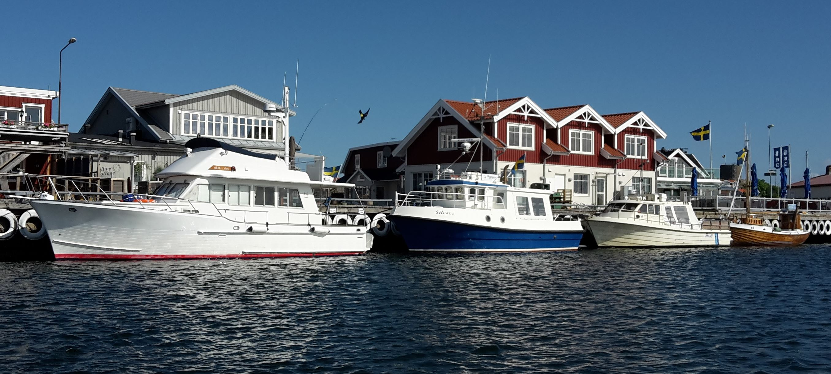 Tour 1: Guided archipelago tour 2 hours with seal safari and ½ hour visit at the island of Vinga