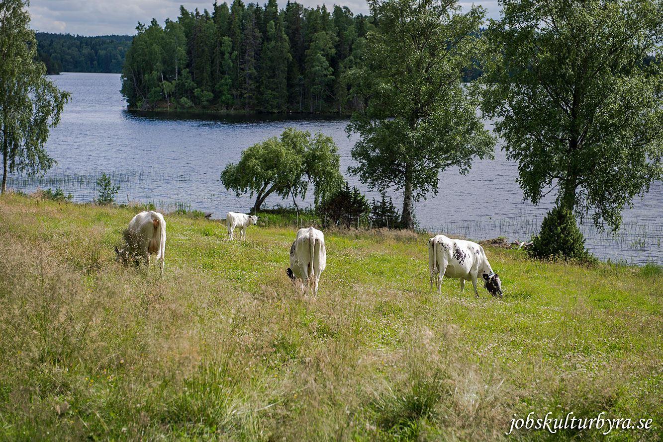 Stora Lunån Gårdsmejeri (dairy)