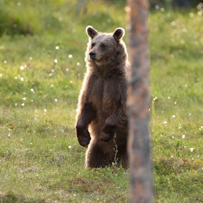 Family hike to a bear's den