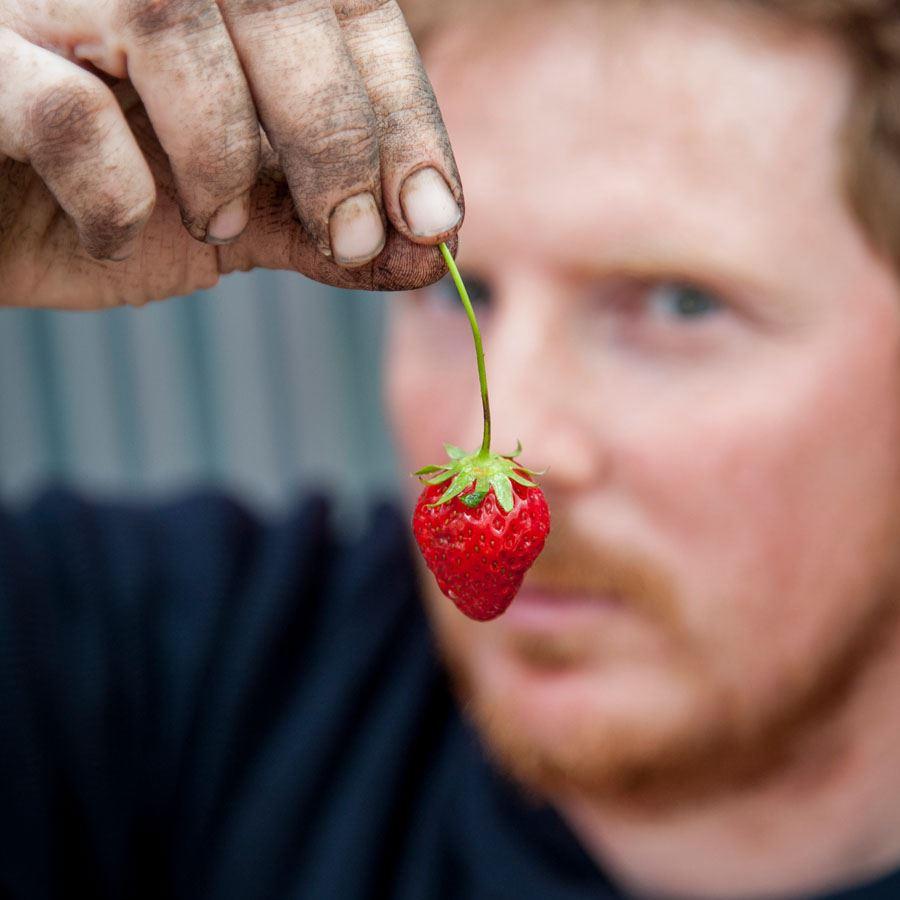 L'agriculture urbaine et le potager de la Cantine