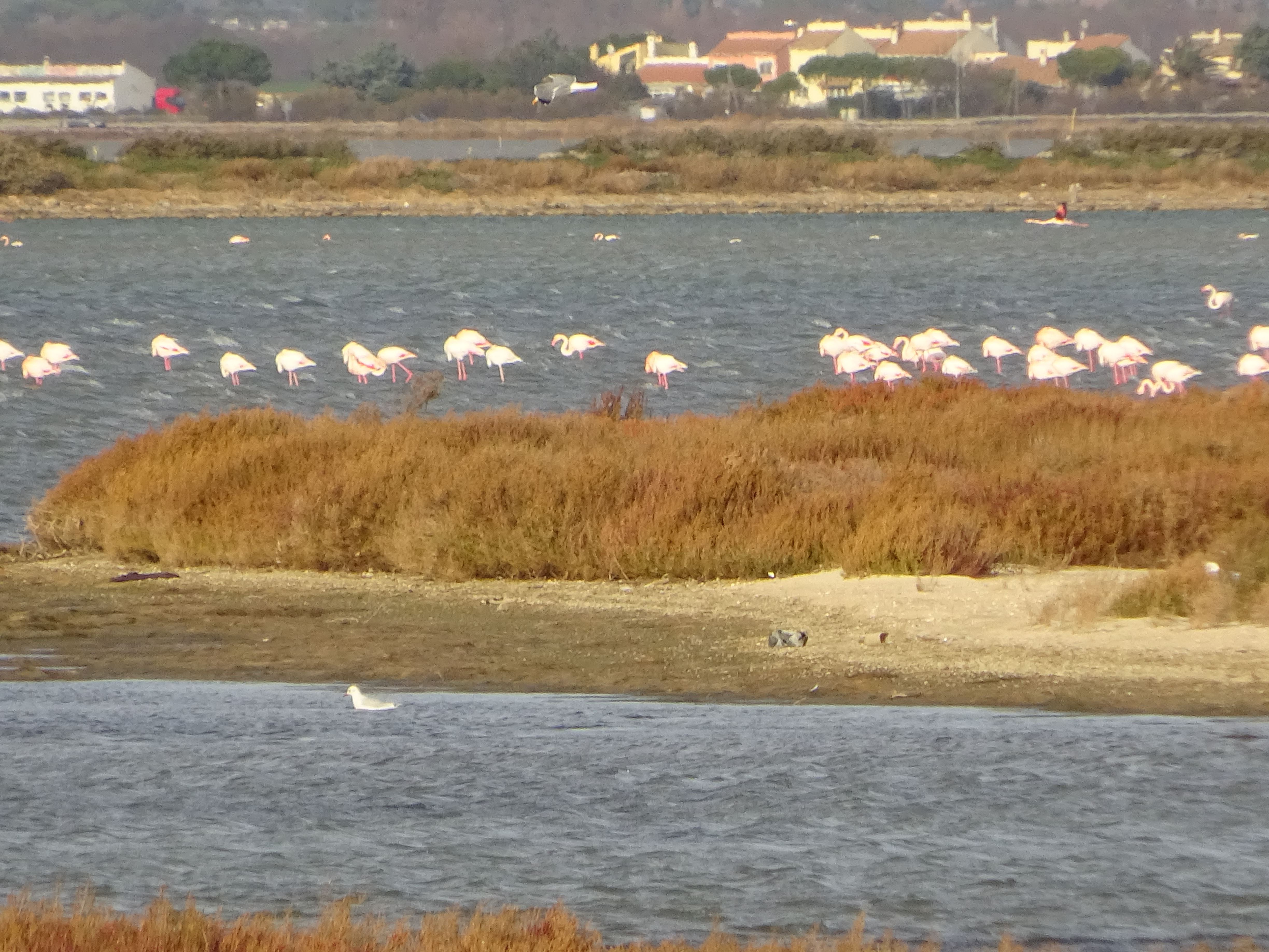 Cultural break between sea and lagoons close to Montpellier with Belle Tourisme