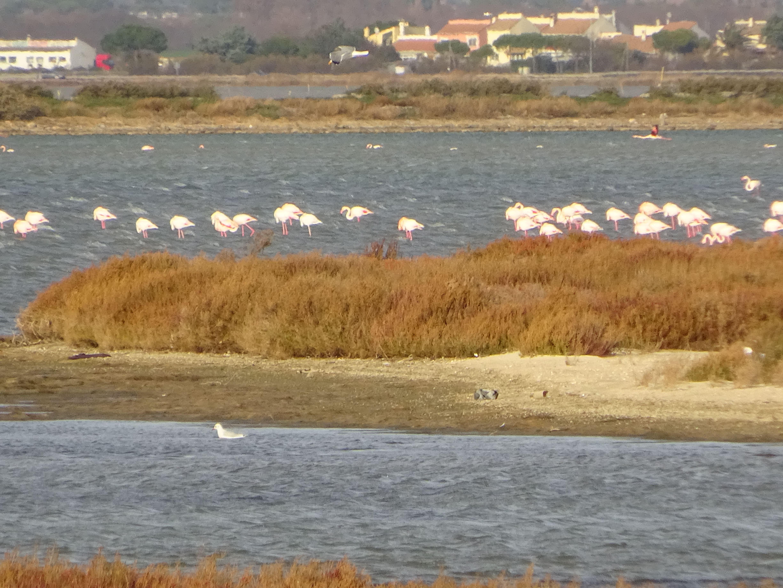 Escapada cultural entre mar y lagunas cercano de Montpellier con Belle Tourisme