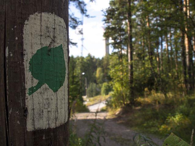 The Tilia Trail