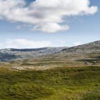 XC och Downhill camp i Årefjällen
