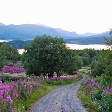 Vildmarksläger för hela familjen i Kolåsen