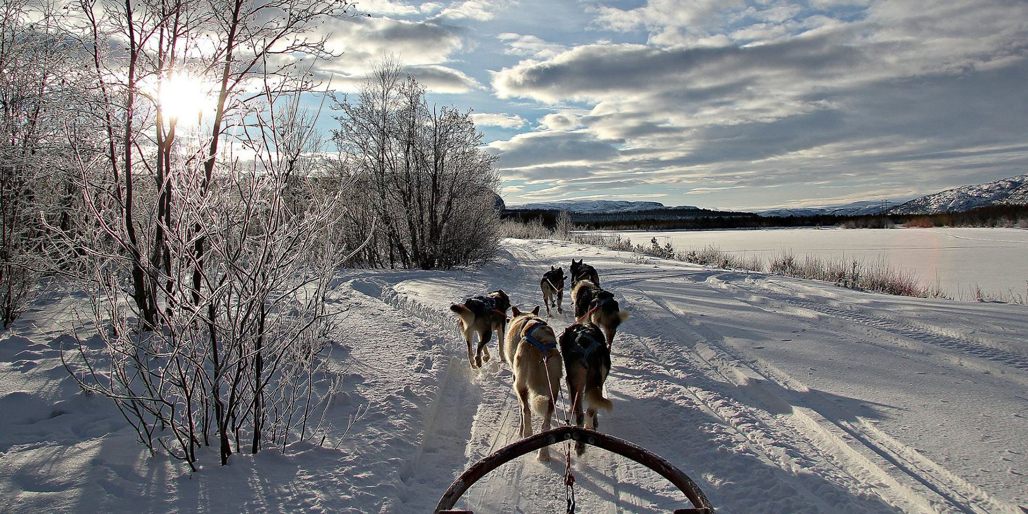 Northern Night at Holmen Husky - Dogsledding with overnight stay