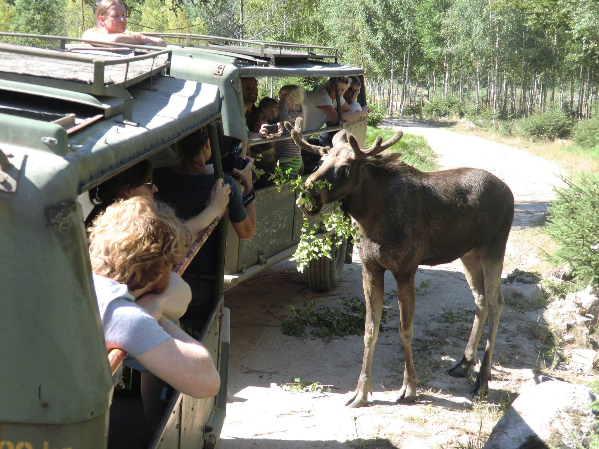 Glasrikets älgpark, Glasriket Moosepark