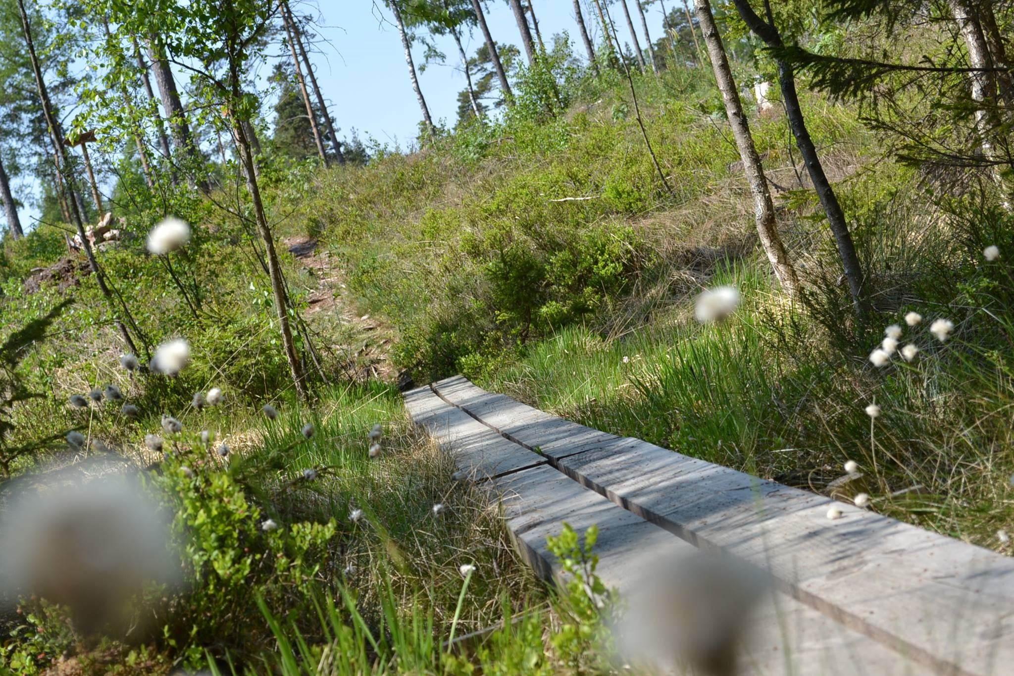 Trollstigen i Målerås